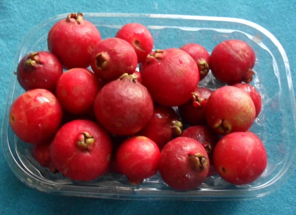 cherry guavas