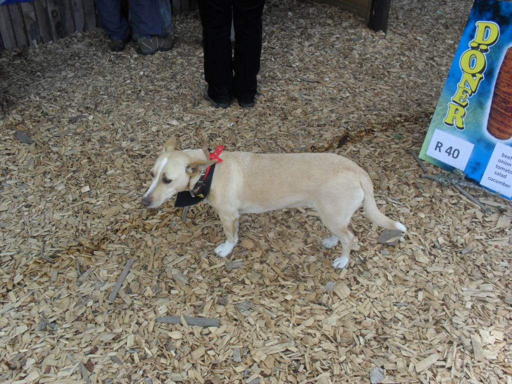 Pet friendly at Outeniqua Farmer's Market